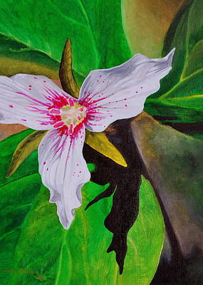 Painting - Painted Trillium by Harry Moulton