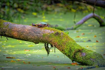 Photograph - Painted Turtle On A Log  by LeeAnn McLaneGoetz McLaneGoetzStudioLLCcom