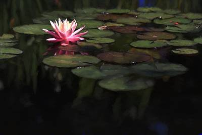 Photograph - Painted Water Lily Among The Lily Pads by Carol Montoya