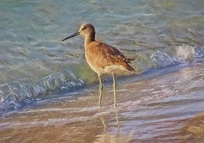 Photograph - Painted Willet by HH Photography of Florida