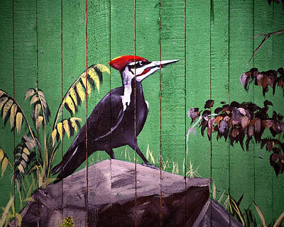 Photograph - Painted Woodpecker On A Baltimore Zoo Fence by Bill Swartwout Fine Art Photography