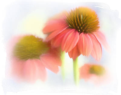 Photograph - Painterly Cone Flowers by David and Carol Kelly