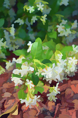Photograph - Painterly Jasmine In Bloom by Aimee L Maher Photography and Art Visit ALMGallerydotcom