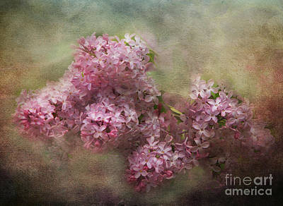 Photograph - Painterly Lilac Blossom Photograph by Clare VanderVeen