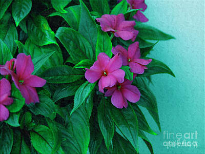Photograph - Painterly Magenta Impatients Flowering Plant by Carol F Austin