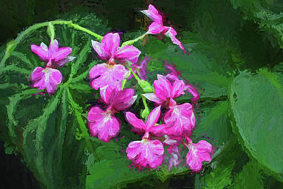 Photograph - Painterly Pink Orchid Spray by HH Photography of Florida