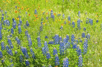 Photograph - Painterly Scenes From Texas. by Usha Peddamatham