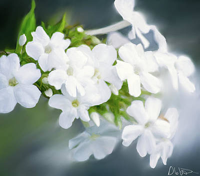 Floral Photograph - Painting Of White Phlox by Garvin Hunter