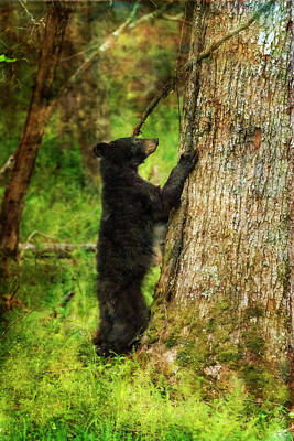 Photograph - Paintography - Bear Ready To Climb Tree by Dan Friend