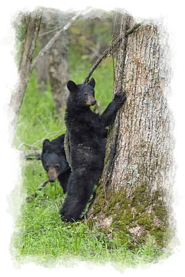 Photograph - Paintography - Bear Standing Up Beside Tree by Dan Friend