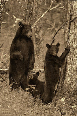 Photograph - Paintography - Family Of Bears In The Woods by Dan Friend