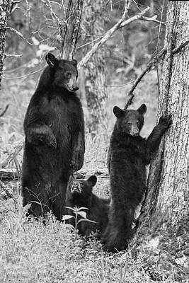 Photograph - Paintography - Mother Bear Looking At One Of Cubs Bears In The Woods by Dan Friend