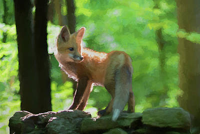 Photograph - Paintography Red Fox On Top Of Rocks by Dan Friend