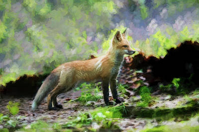 Photograph - Paintography Red Fox Standing Straight by Dan Friend