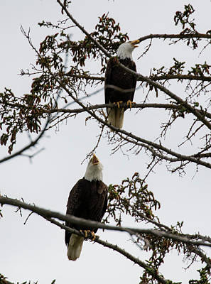 Photograph - Pair In A Tree by Gloria Anderson