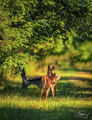 Photograph - Pair Of Baby Deer by Francisco Gomez