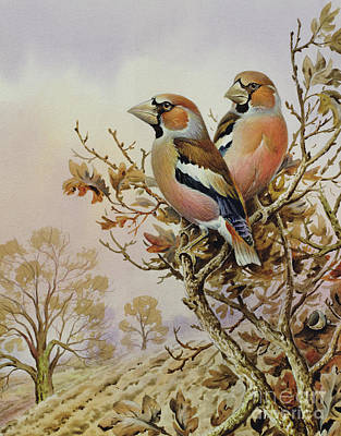Finch Painting - Pair Of Chaffinches by Carl Donner