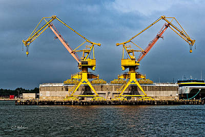 Photograph - Pair Of Cranes by Christopher Holmes