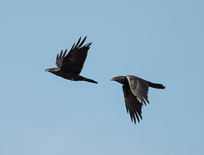 Photograph - Pair Of Crows by Loree Johnson
