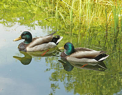 Photograph - Pair Of Ducks by Bob Slitzan