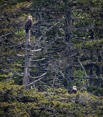 Photograph - Pair Of Eagles by David A Lane