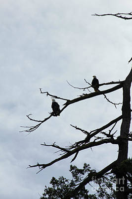 Photograph - Pair Of Eagles by Donna L Munro