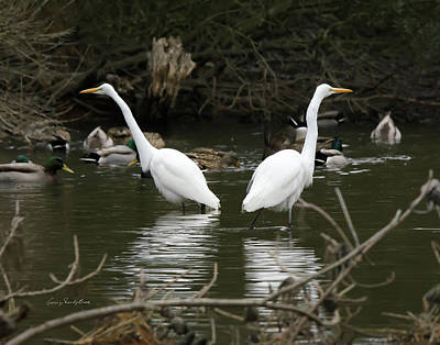 Pair Of Egrets Art Print by George Randy Bass