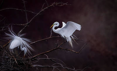 Pyrography - Pair Of Egrets by Kelly Marquardt