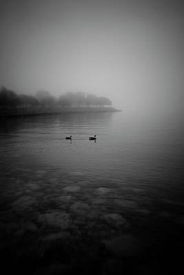 Photograph - Pair Of Floating Geese by Bernice Williams