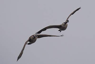 Ganders Photograph - Pair Of Geese by Paul Freidlund