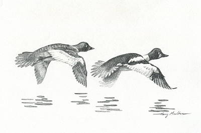 Drawing - Pair Of Goldeneye Ducks by Harry Moulton