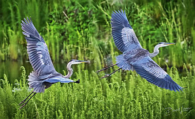 Photograph - Pair Of Great Blue Herons  by David A Lane