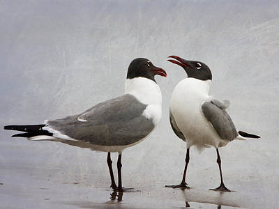Photograph - Pair Of Laughing Gulls by Charles McKelroy