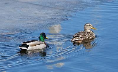 Photograph - Pair Of Mallard Ducks Inthunder Bay by Michael Peychich