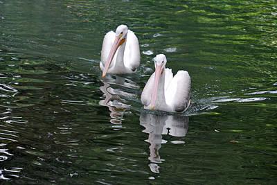 Pair Of Pelicans Art Print by Teresa Blanton