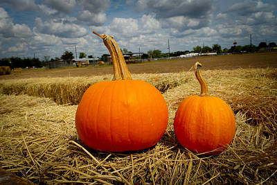 Photograph - Pair Of Perfect Pumpkins by Marisela Mungia