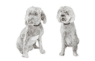 Drawing - Pair Of Pretty Poodles Pups by Jack Pumphrey