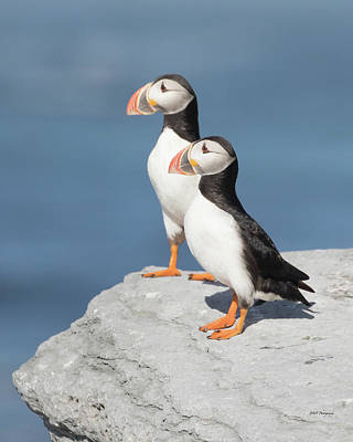 Photograph - Pair Of Puffins by Paul Treseler