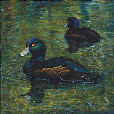 Painting - pair of Scaup by Peter Jean Caley