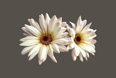 Floral Photograph - Pair Of White Daisies by Susan Savad