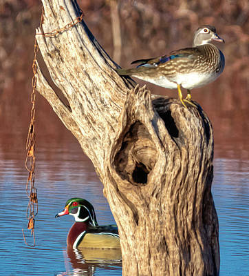 Photograph - Pair Of Woodies  by Thomas Pettengill