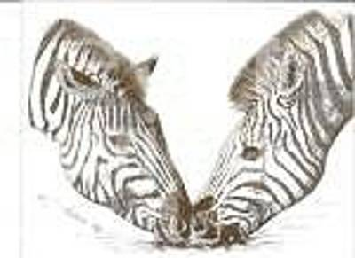Drawing - Pair Of Zebras by Bill Hubbard