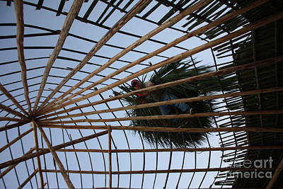 Photograph - Palapa Web by Brian Boyle