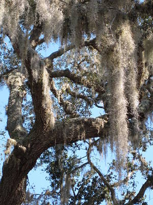 Photograph - Palatka by Jeff Seaberg