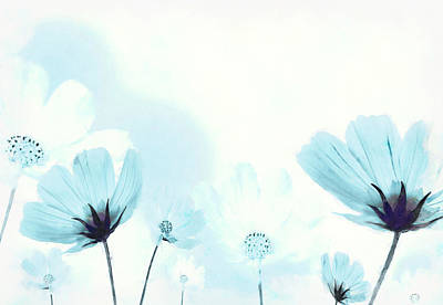 Blooming Digital Art - Cosmos Flowers by BONB Creative