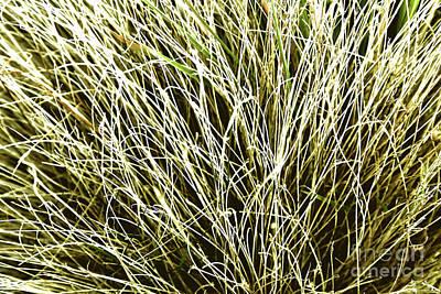 Photograph - Pale Grasses by Nareeta Martin