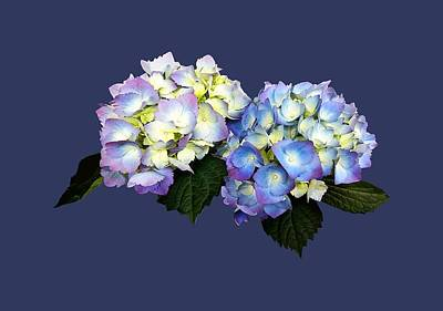 Photograph - Pale Pink And Blue Hydrangea by Susan Savad