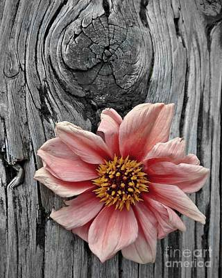 Photograph - Pale Pink Flower On Wood by Patricia Strand