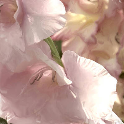 Digital Art - Pale Pink Glads by Sand And Chi