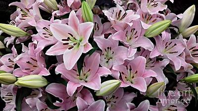 Photograph - Pale Pink Star Lilies by Joan-Violet Stretch